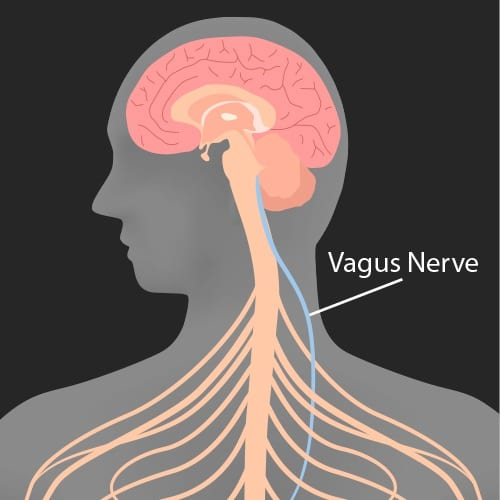 Guts, Wits, Mircrobiome, and the Vagus Nerve