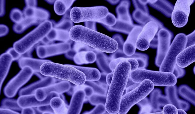 Are Your Gut Microbes Making You Fat?