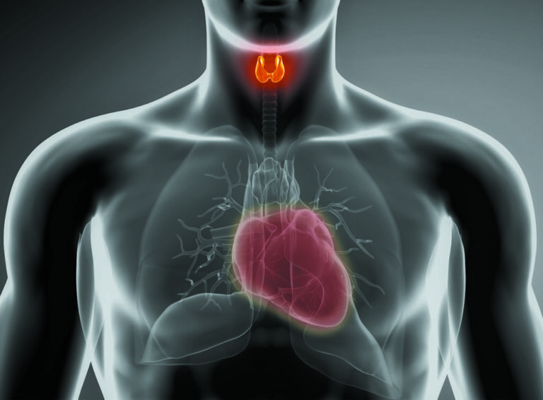 Heart Disease: How Hypo- and Hyperthyroidism Could Increase Your Risk