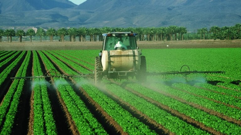 The Link between Insecticides and Diabetes