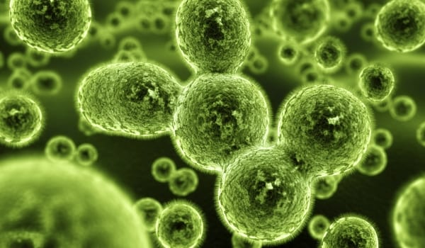 2 Surprising Facts about Alzheimer's: Mold Can Cause Alzheimer's & It's Reversible