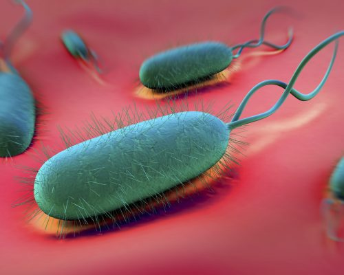 H. pylori: What It Is + 9 Natural Treatments