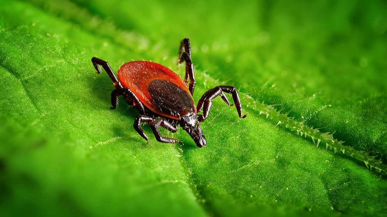 Lyme Disease: A Personal Journey and Path to Recovery
