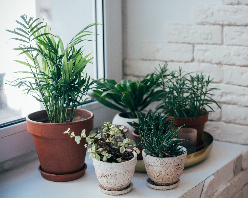 The Best Indoor Air Purifying Machines… and Plants!